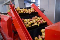 Конвейер для овощей - покупай Без посредников