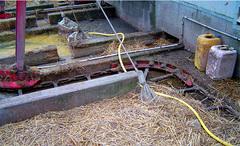 Скребковый транспортер для удаления навоза